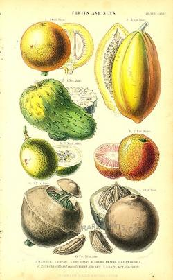 tropical fruit from vegetable kingdom by william rhind tropical fruit antique print