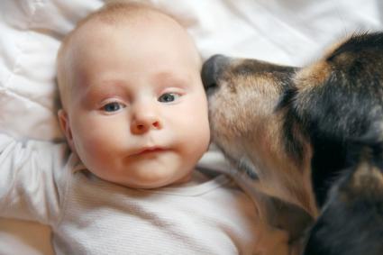 Pet Dog Kissing Baby