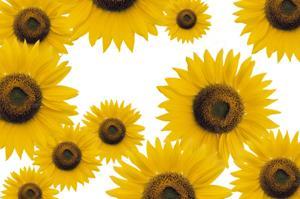 Sunflowers add a splash of color!