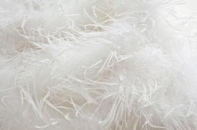 down feathers