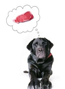 Dog thinking of steak