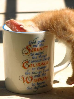 Cat Drinking From Mug
