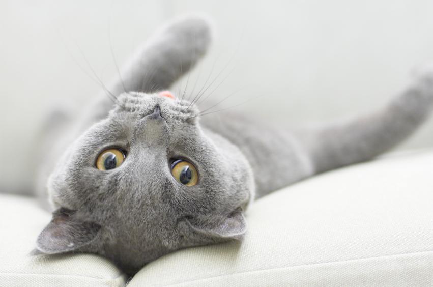 Feline Diabetes Symptoms Slideshow