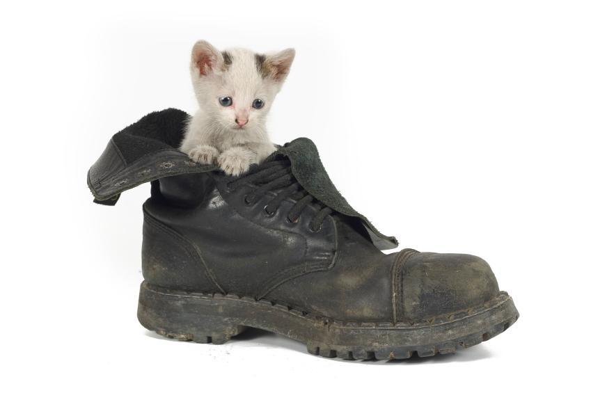 Kitty in Shoe