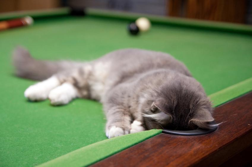 Pool Playing Kitty