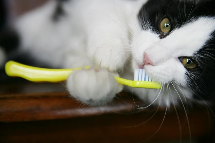 Brushing Kitten