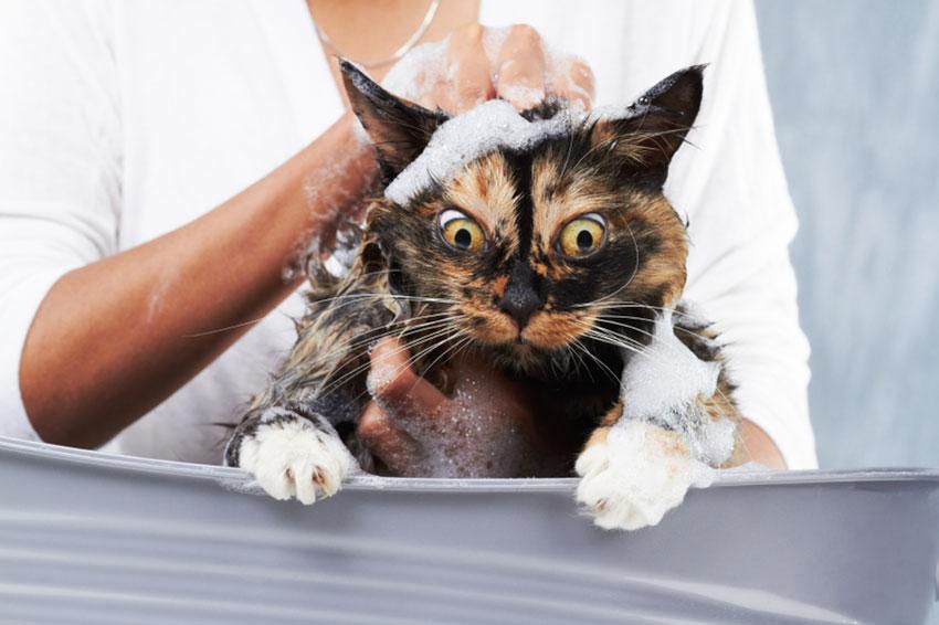 White Cat Bath
