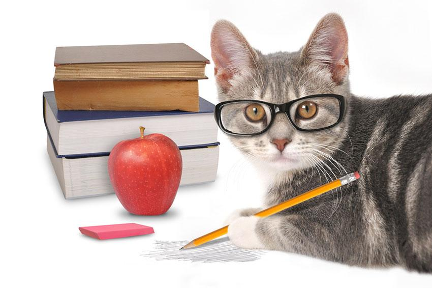 Cat with glasses and books