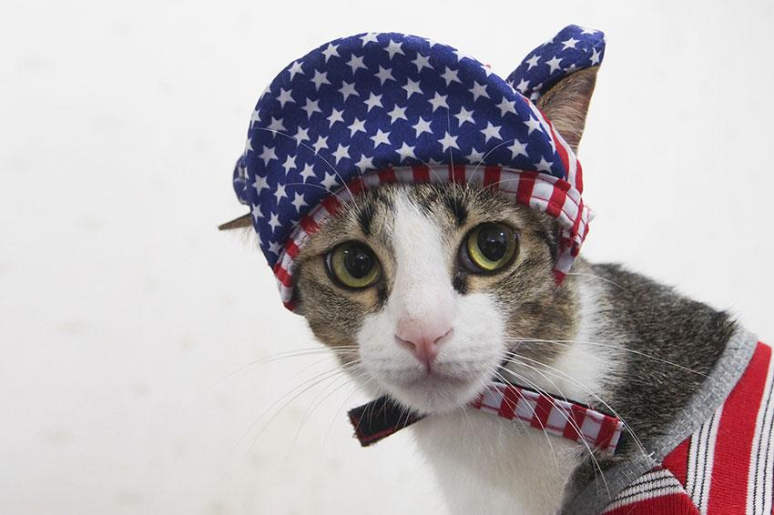 Cat wearing red, white and blue bonnet