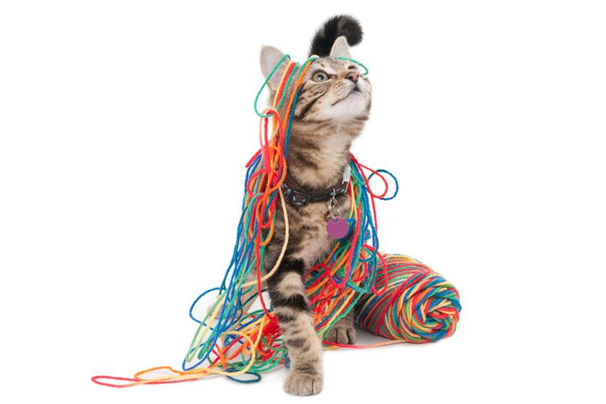 Cat wrapped in colorful yarn