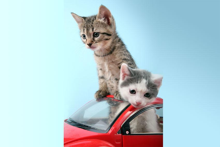 Kittens in car