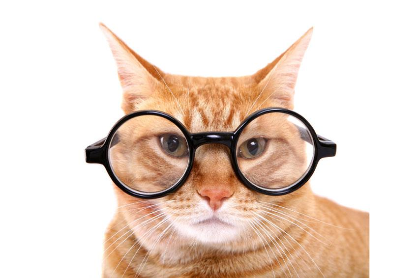 Cat with big glasses