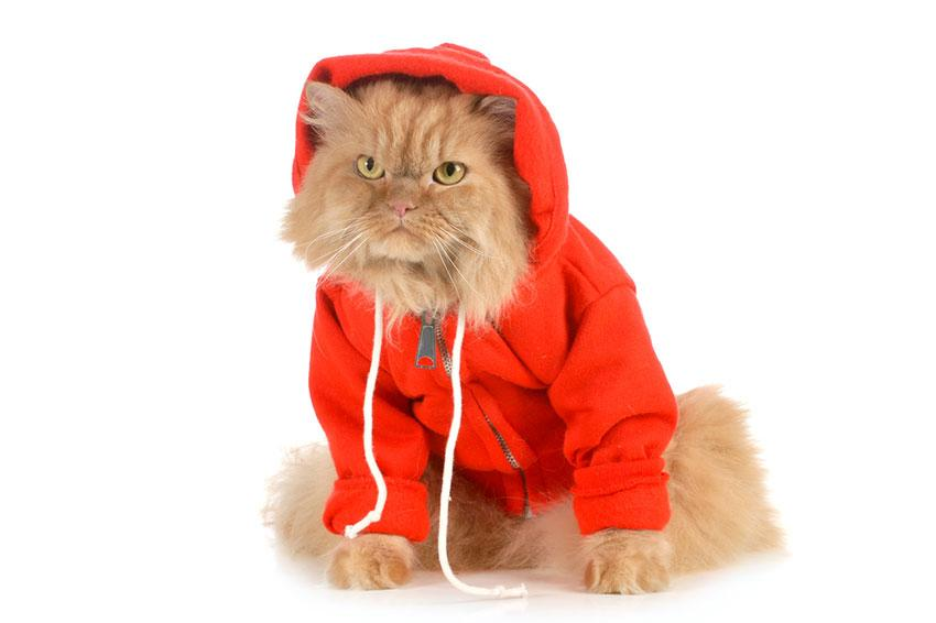 Cat wearing coat