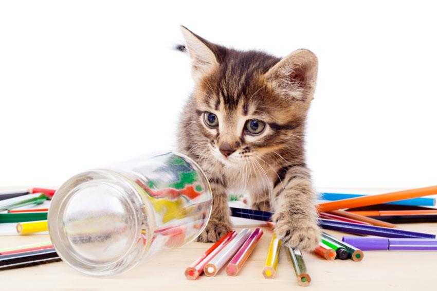 Kitten with pencils