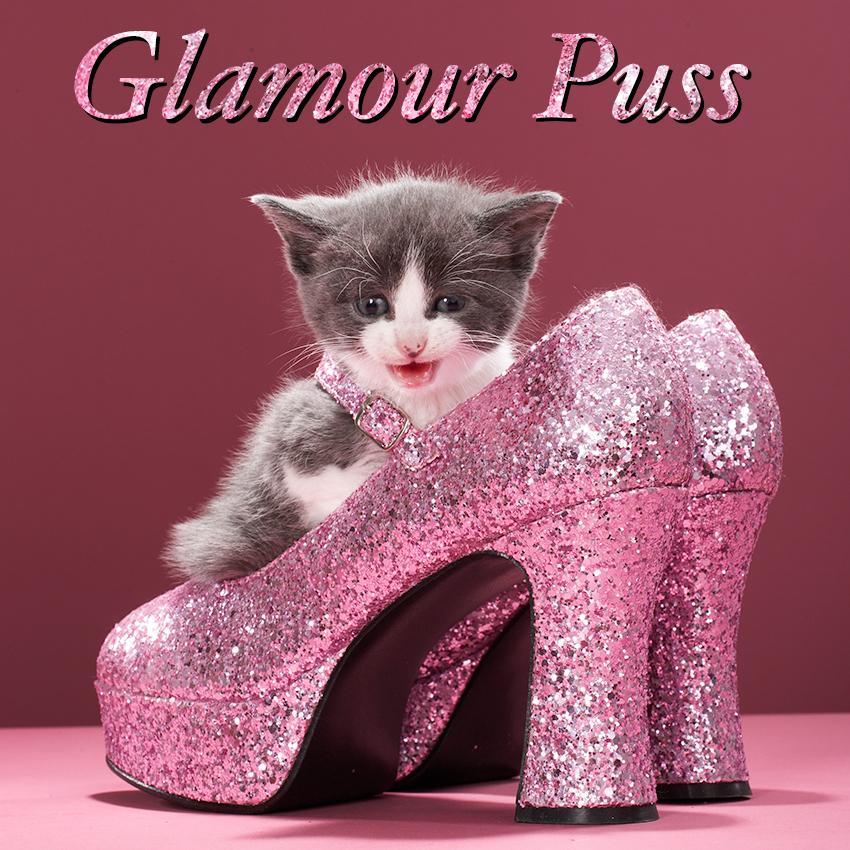 Kitten in Shoes