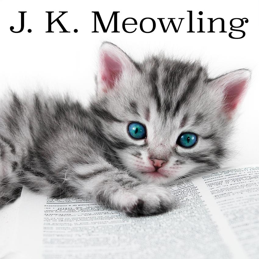 Kitten With Book
