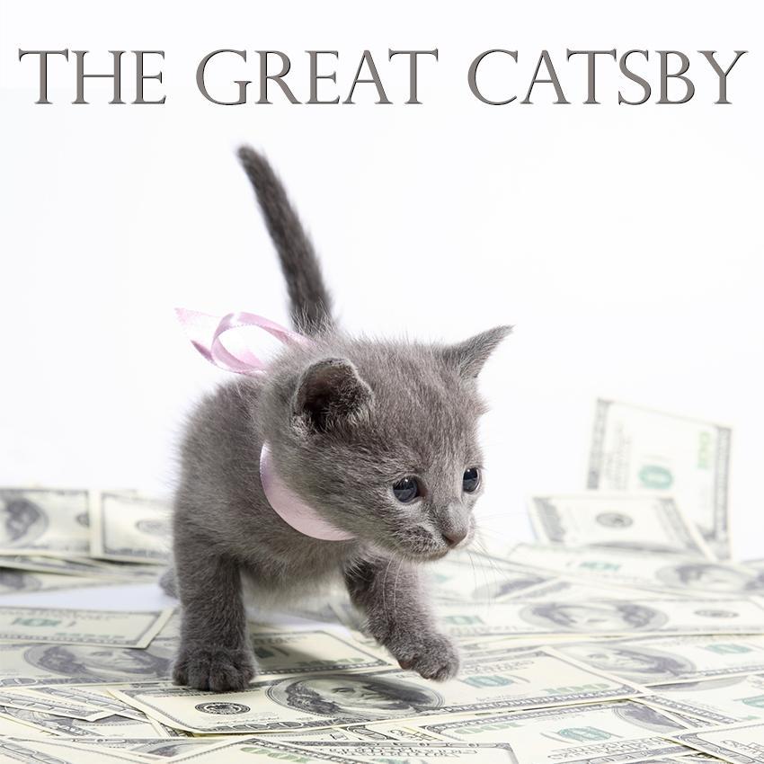 Rich Kitten
