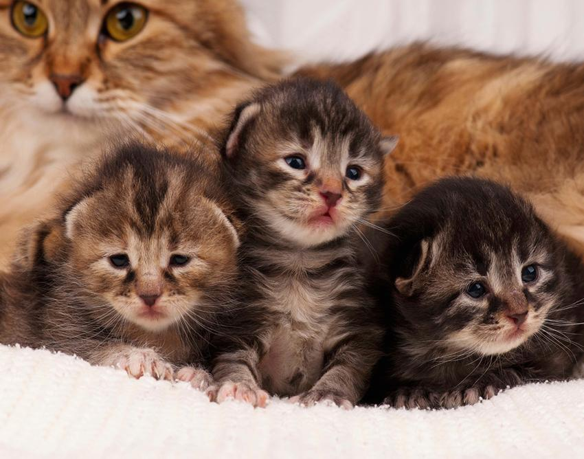 How Long Do Mother Cats Leave Their Kittens