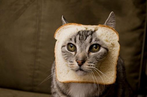 Cat with head poking through slice of bread