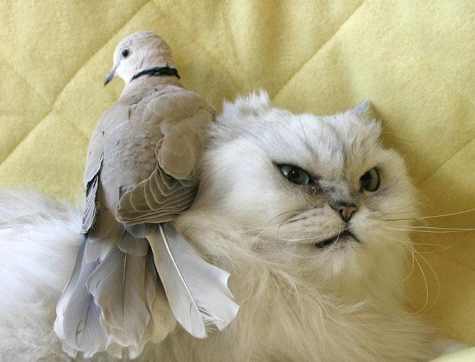 Cats hate birds