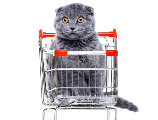 Cat in a shopping cart