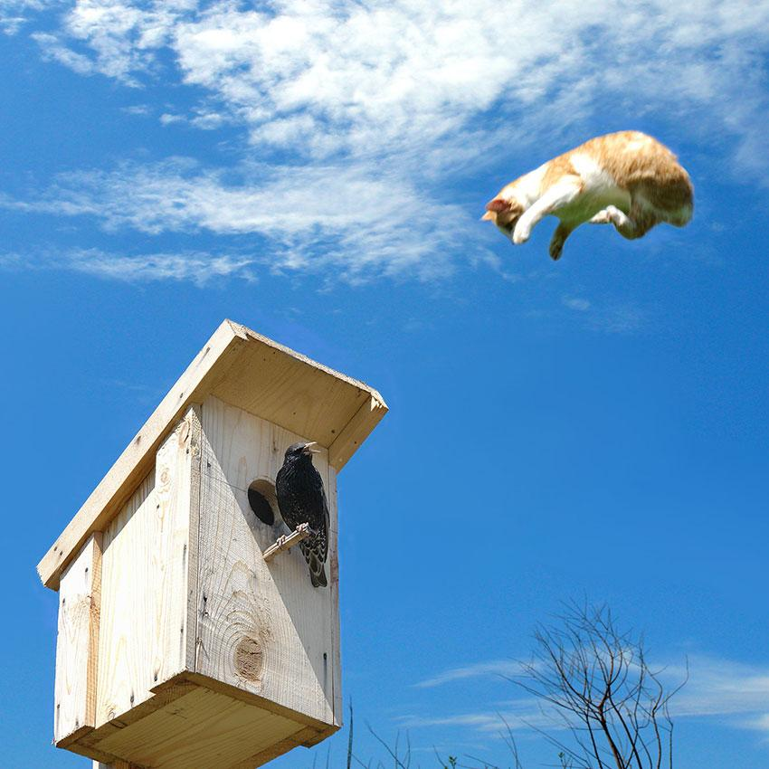 Cat jumping on bird house