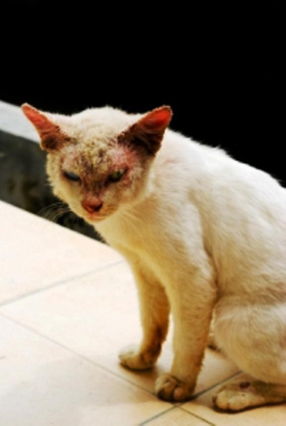 Cat Skin Problems Slideshow
