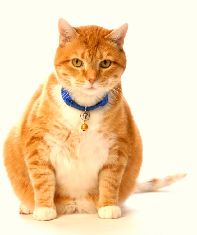 What Animal Is In Cat Food Animal Fat
