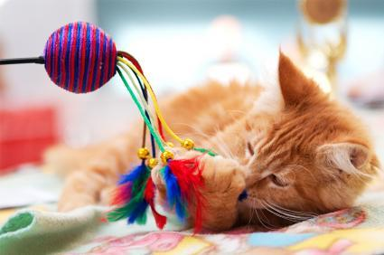 Wand teaser cat toys slideshow for Cat wand toys