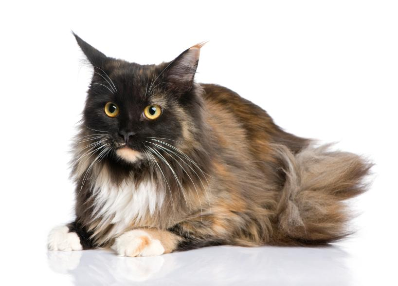 what is cosequin for cats