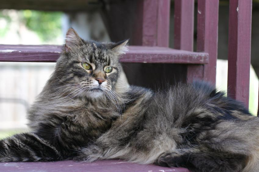 alpha cat behavior