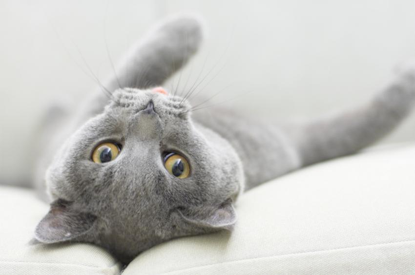 Diabetes in cats symptoms and signs