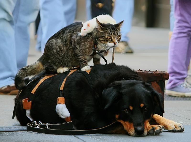 Cat Rat and Dog