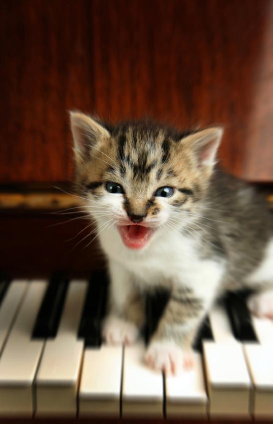 Singing Kitten
