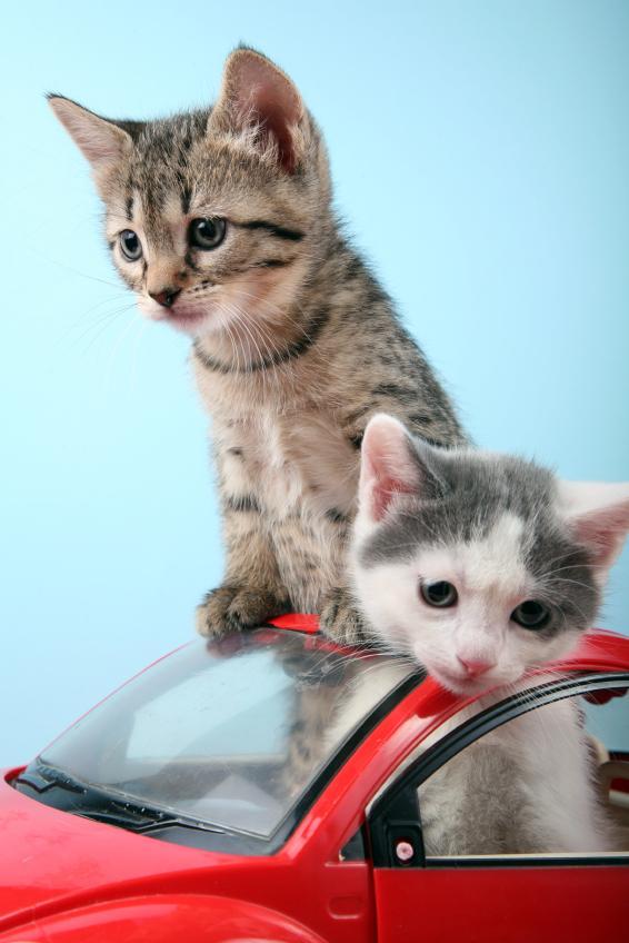 Kittens in a Car