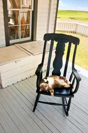 Cat snoozing on a shady porch