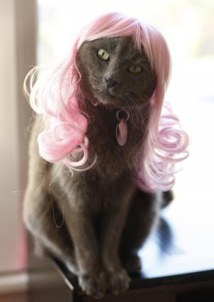 Cat in pink wig