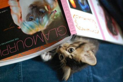 Kitten reading Glamourpuss