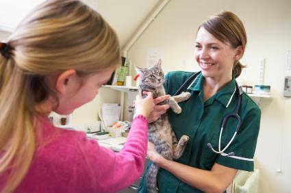 Cat being examined