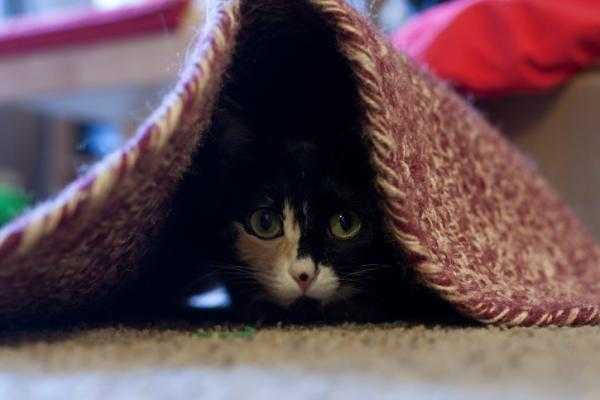 Hiding Spots For Cats