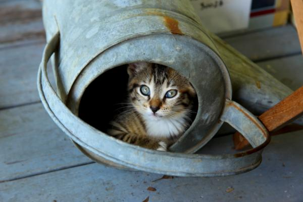 cat hiding in watering can