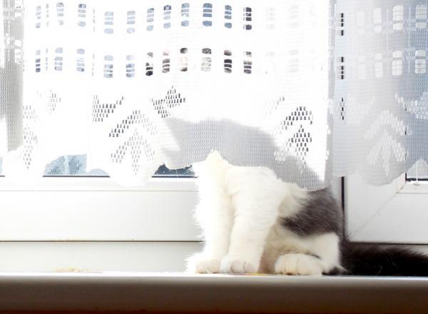 kitty hiding behind curtain