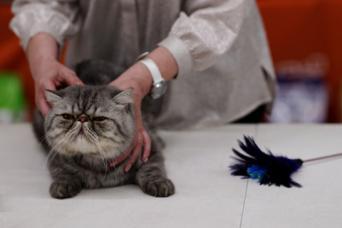 cat with judge