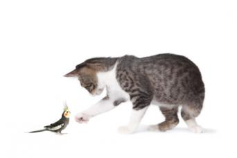 cat with bird