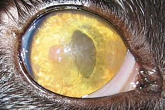 steroid eye drops while nursing