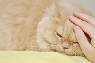 cat post scratcher