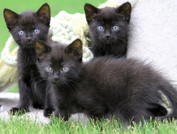 free kittens san diego
