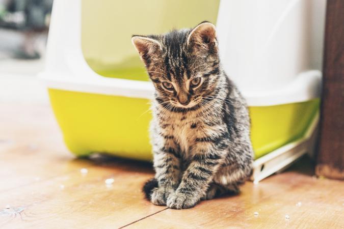pensive kitty