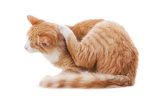 Scratching cat