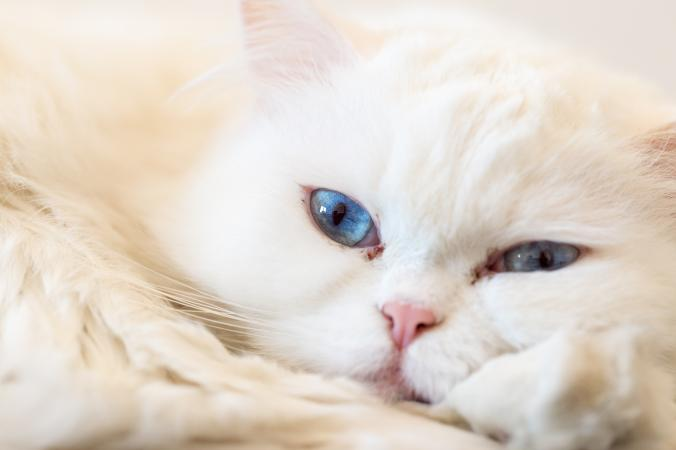 white cat with crusty eyes